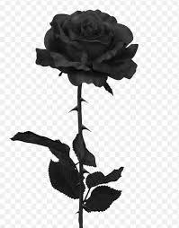 black rose png